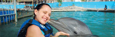 galer�a Dolphin Discovery