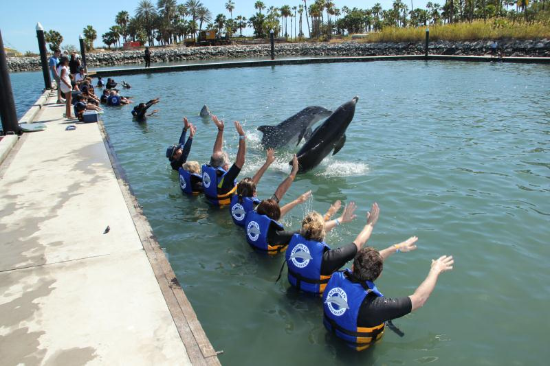 Dolphin Discovery Locaci�n Los Cabos