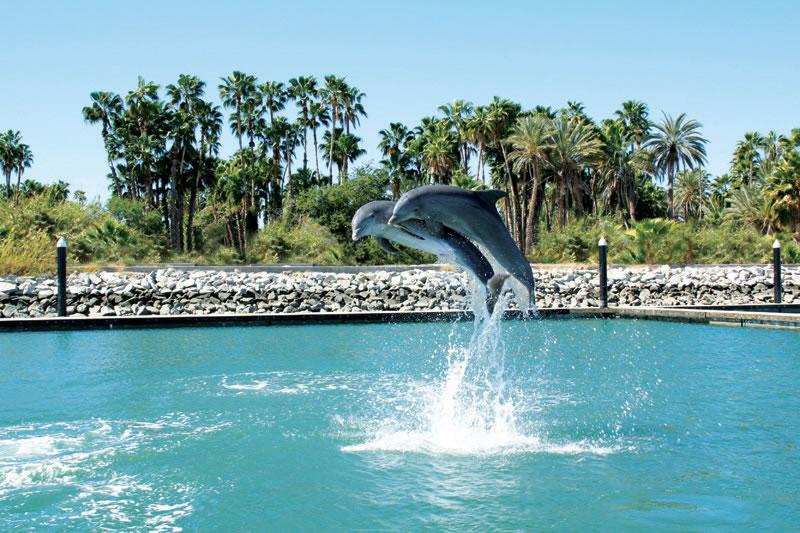 Nado con delfines en Los Cabos-Baja California   Dolphin ...
