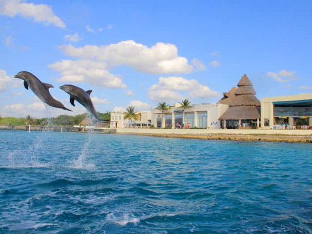 Dolphin Discovery Locaci�n Cozumel