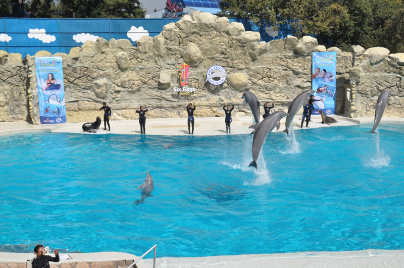 Dolphin Discovery Locaci�n Six Flags M�xico