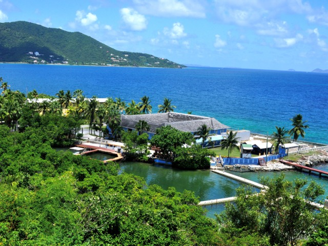 Dolphin Discovery Locaci�n Tortola