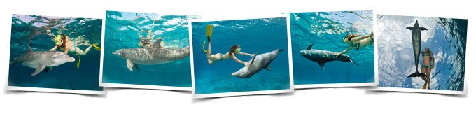 Comportamientos Dive with Dolphins