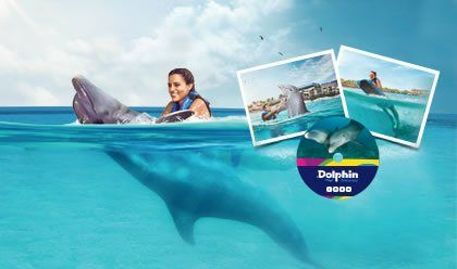 Dolphin Swim Adventure Memories