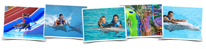 Comportamientos Dolphin Royal Swim