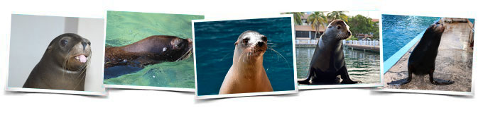 Comportamientos Sea Lion Discovery