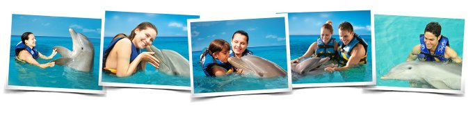 Comportamientos Dolphin Encounter