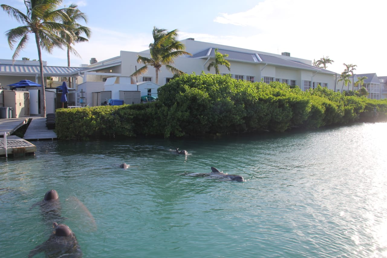 DOLPHIN DISCOVERY ADQUIERE DOLPHIN CONNECTION EN FLORIDA