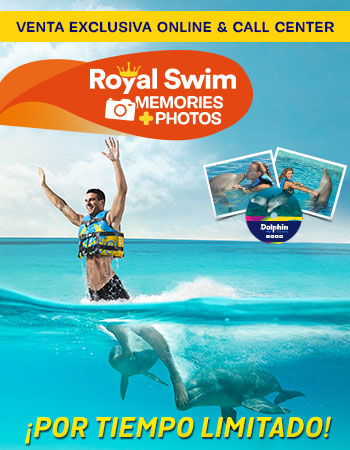Dolphin Royal Swim Memories
