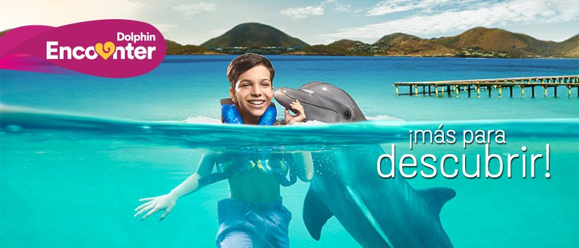 Dolphin Discovery Anguila