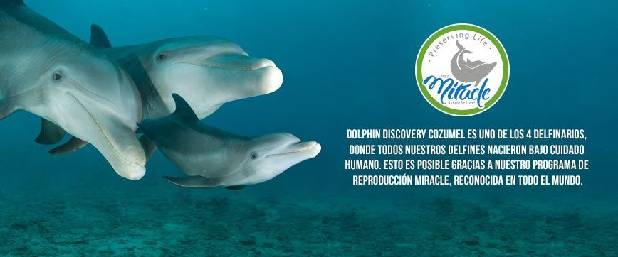 Dolphin Discovery Cozumel