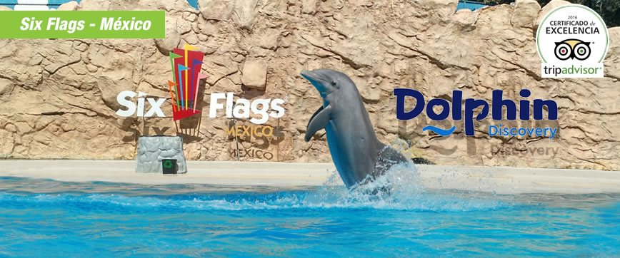 Dolphin Discovery Sixflags