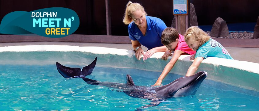 Dolphin Discovery Gulf World