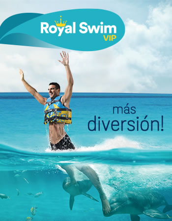 Dolphin Royal Swim Program