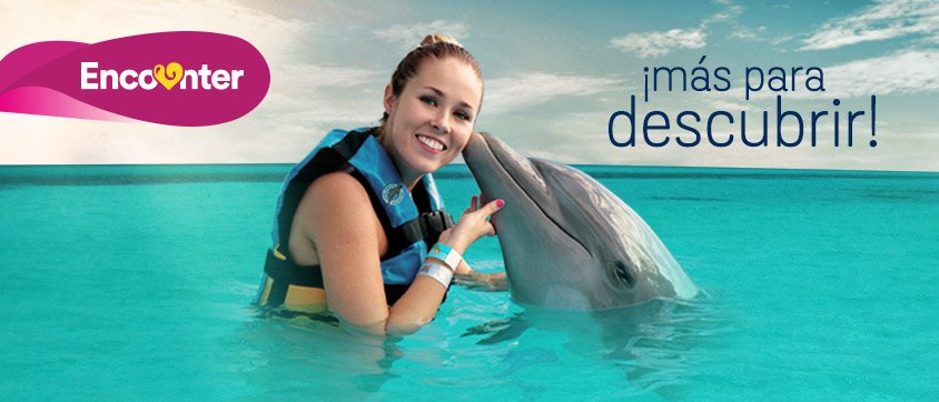 Dolphin Discovery Montego Bay