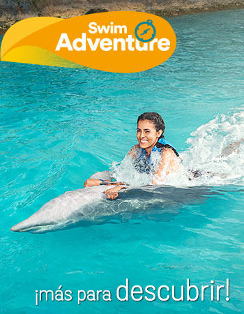 Dolphin Discovery Saint Kitts
